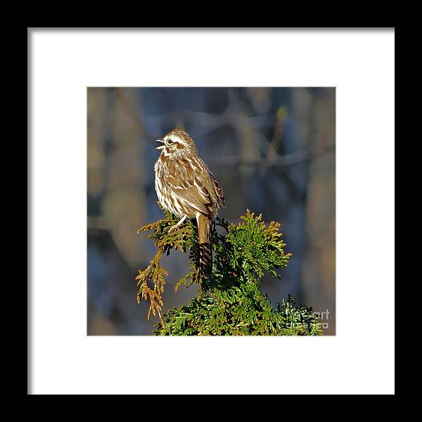 Bird Photography Framed Print featuring the photograph Morning Song by Elizabeth Coats