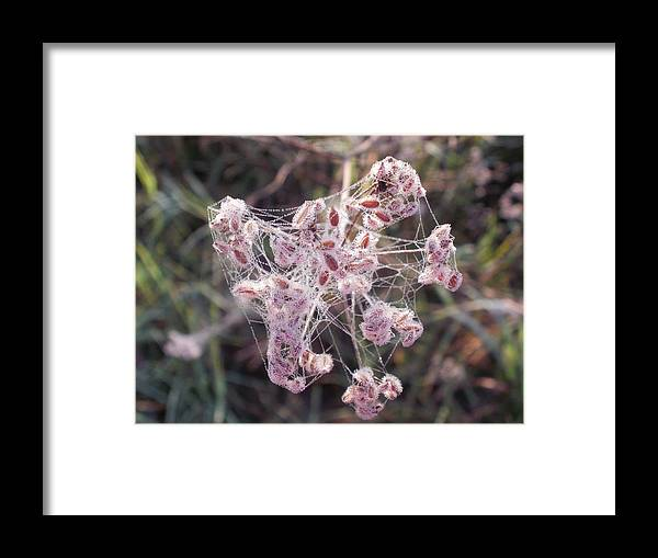 Spider Framed Print featuring the photograph Morning With A Spider by Desiree Holloway