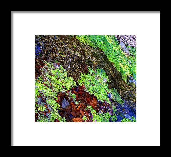 Moss Framed Print featuring the photograph Moss Pond by Charles Marinello