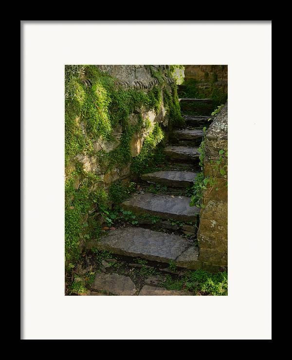 Step Framed Print featuring the photograph Mossy Steps by Carla Parris
