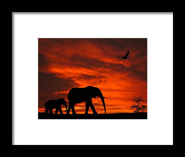 Mother And Baby Elephants Sunset Silhouette Series Framed Print By David Dehner