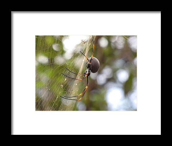 Spider Framed Print featuring the photograph Mother And Baby by Elizabeth Hardie