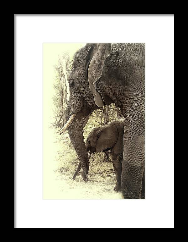 Elephant Framed Print featuring the photograph Mother And Daughter by Lyn Darlington