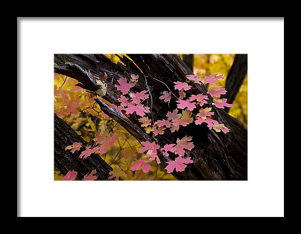 Fall Colors Framed Print featuring the photograph Mother Nature's Beauty by Saija Lehtonen