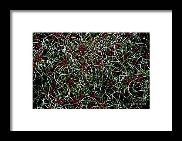 Blooms Framed Print featuring the photograph Mother's Clematis by Joseph Yarbrough