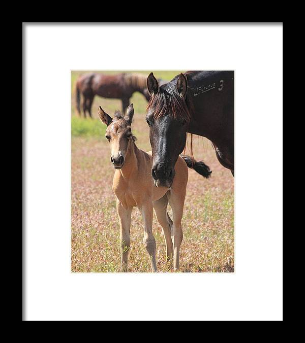 Horse Framed Print featuring the photograph Mother's Love by Gene Praag