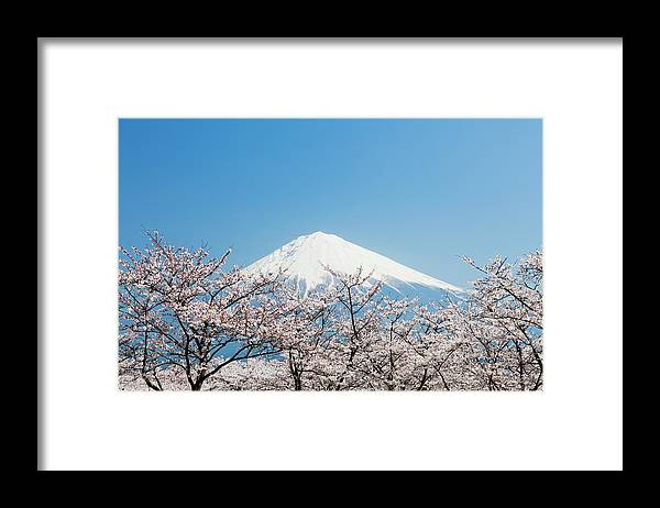 Scenics Framed Print featuring the photograph Mount Fuji & Cherry Blossom by Ooyoo