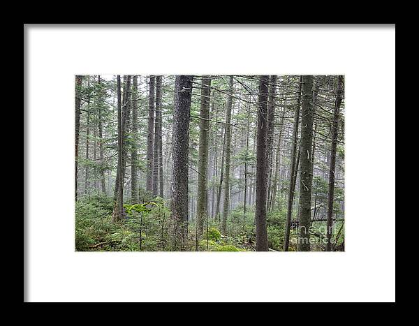 Ecosystem Framed Print featuring the photograph Mount Jim - Kinsman Notch New Hampshire by Erin Paul Donovan