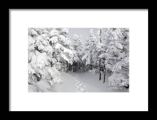 Wilderness Framed Print featuring the photograph Mount Osceola Trail - White Mountains New Hampshire by Erin Paul Donovan