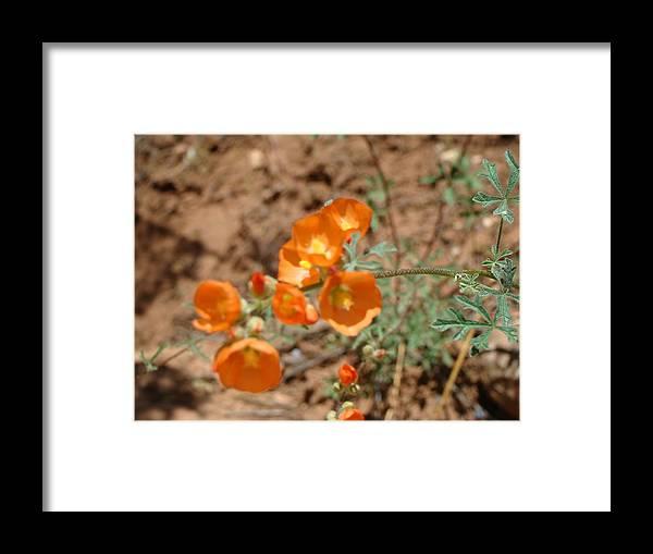 Flowers Framed Print featuring the photograph Mountain Flowers by Karen j Kobrin Cohen