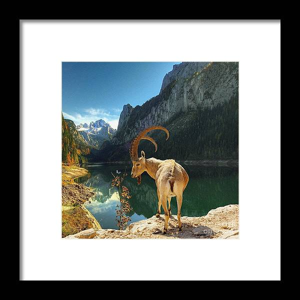Liane Framed Print featuring the photograph Mountain Goat by Liane Wright