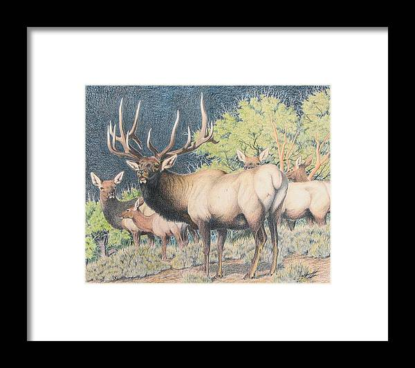 Bull Framed Print featuring the painting Mountain Monarch by Darcy Tate