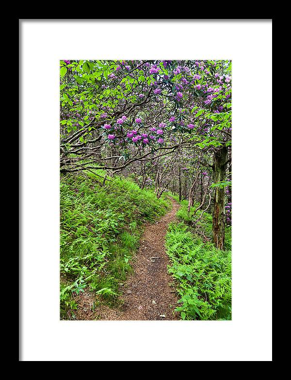 Rhododendron Framed Print featuring the photograph Mountain Trail With Catawba Rhododendron by Mark VanDyke