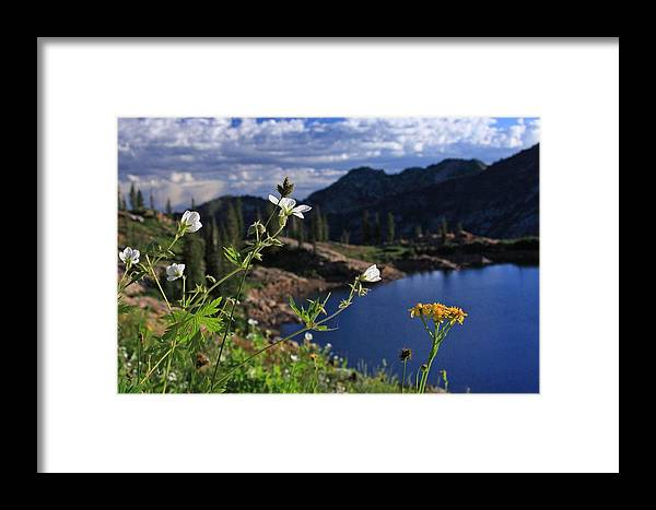 Bloom Framed Print featuring the photograph Mountain Wildflowers by Gene Praag