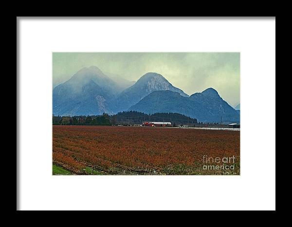 Blueberry Fields Framed Print featuring the photograph Mountains And Blueberries by Dawn Harris