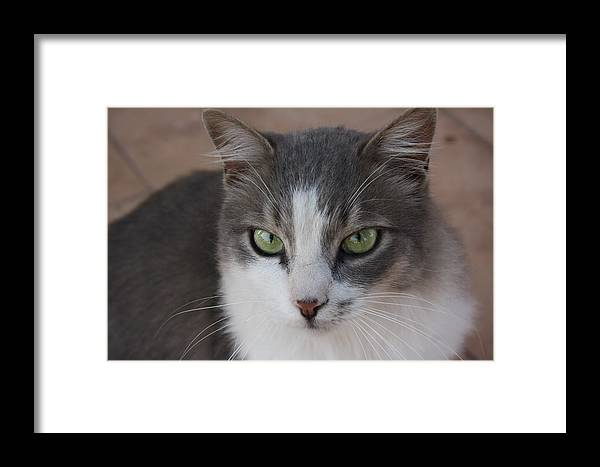 Grey Cats Framed Print featuring the photograph Mouse by Anita Dale Livaditis