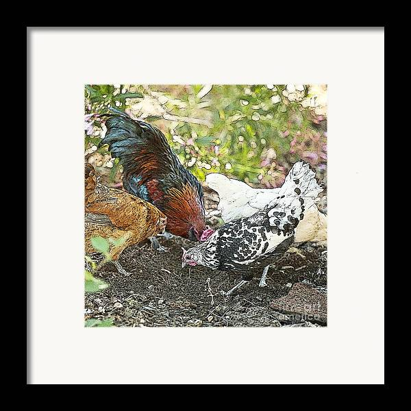 Rooster Art Framed Print featuring the painting Mr. Rooster And All The Chickens Scratching For A Snack by Artist and Photographer Laura Wrede