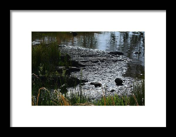 Framed Print featuring the photograph Muck And Beauty by Beth Sanders