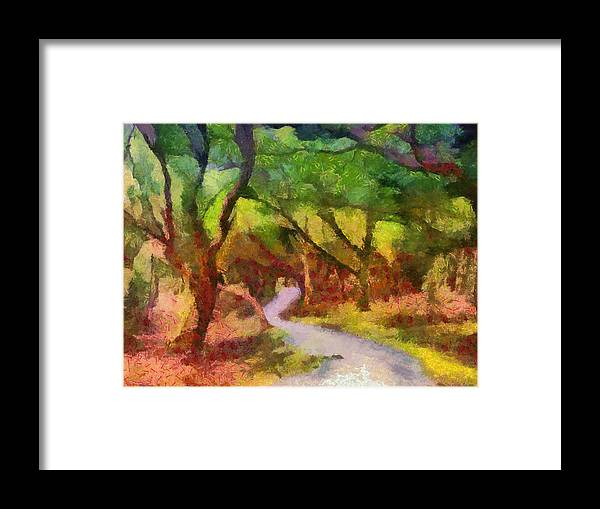 Woods Framed Print featuring the photograph Muckross Woods by Michael Walsh