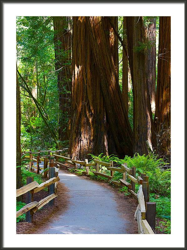 Muir Woods by Michael Blesius