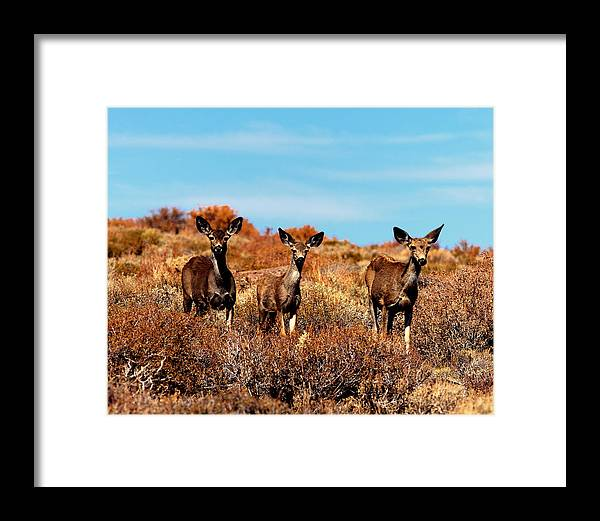 Animal Framed Print featuring the photograph Mule Deer Bodie Hills Ca by Troy Montemayor