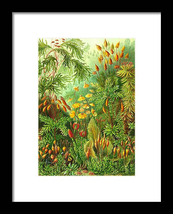 Muscinae Framed Print featuring the digital art Muscinae by Unknown