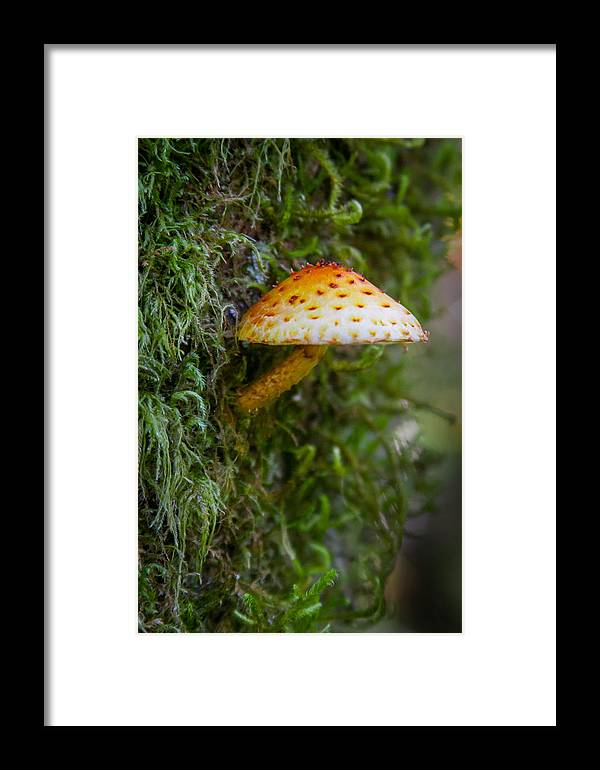 Fungi Framed Print featuring the photograph Mushroom And Moss by W Chris Fooshee