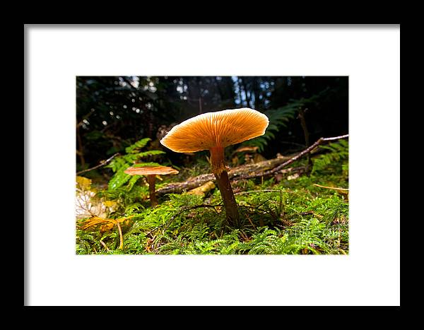 Mushroom Framed Print featuring the photograph Mushroom Heaven 8 by Terry Elniski