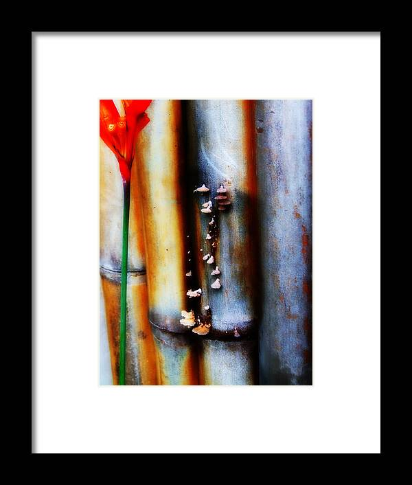 Bamboo Framed Print featuring the photograph Mushroom On Bamboo 2 by Lyle Barker