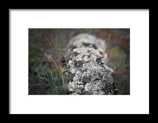 Fine Art Photography Framed Print featuring the photograph Mushroom Road by Sammy Miller