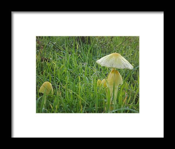 Framed Print featuring the photograph Mushroom Umbrellas by Randy Esson