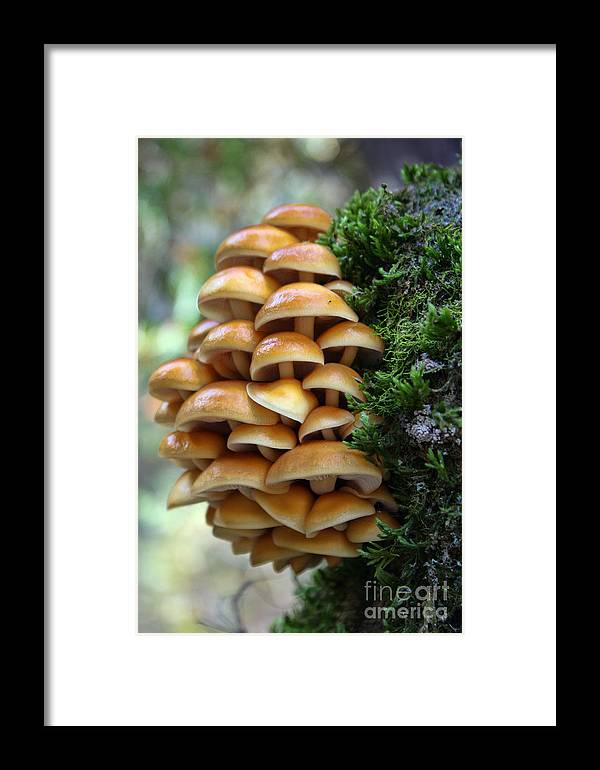 Mushrooms Framed Print featuring the photograph Mushrooms 2 by Kristy Ollis
