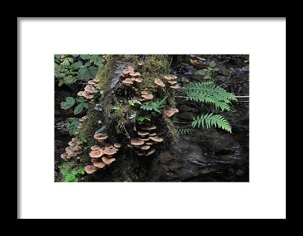 Fern Canyon Framed Print featuring the photograph Mushrooms In Fern Canyon by Scott Lenhart