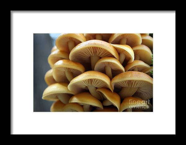 Nature Framed Print featuring the photograph Mushrooms by Kristy Ollis
