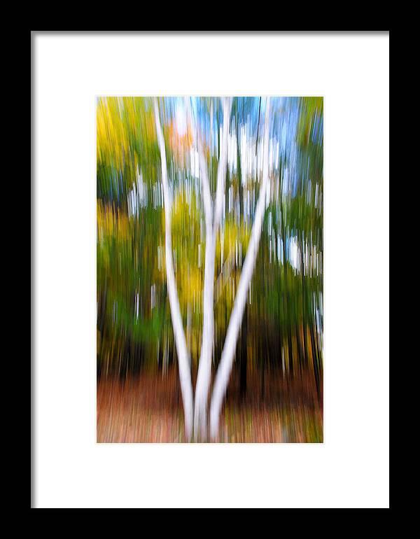 Birch Tree Fall Colours Muskoka Autumn Blur Framed Print featuring the photograph Muskoka Tales 11 by Daniel Matei