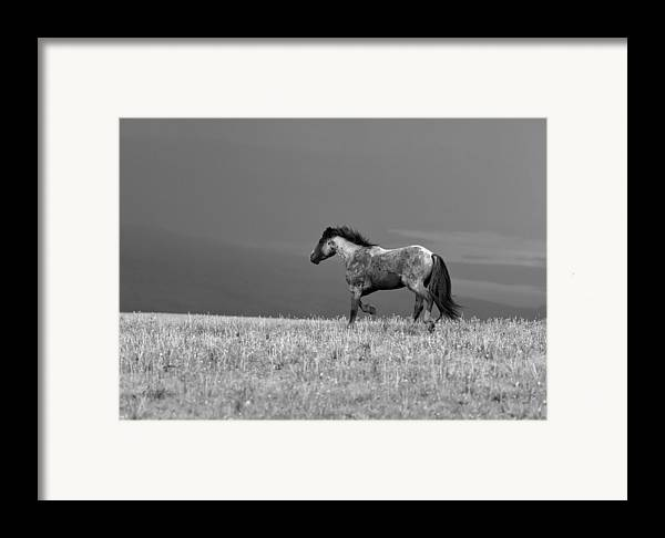 Beautiful Framed Print featuring the photograph Mustang 2 Bw by Roger Snyder