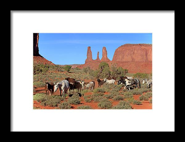 Scenics Framed Print featuring the photograph Mustang by Tier Und Naturfotografie J Und C Sohns