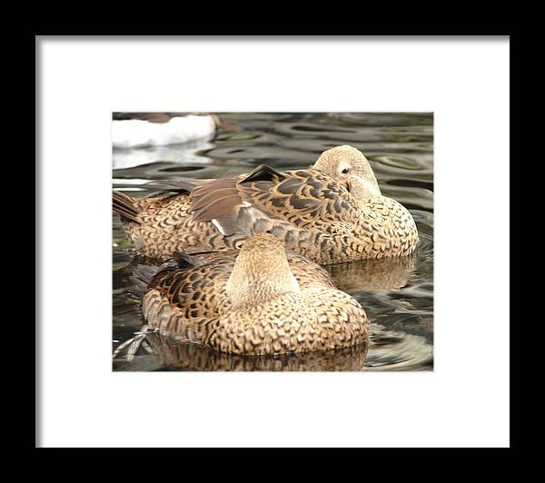 Bird Framed Print featuring the photograph My Beak Is Cold by Lew Davis