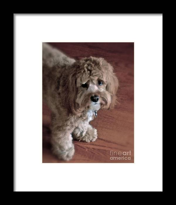 Charley Framed Print featuring the photograph My Boy Charley by Christy Gendalia