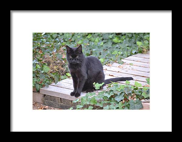 Black Cat Framed Print featuring the photograph My Cat Tippy by Belinda Amerman