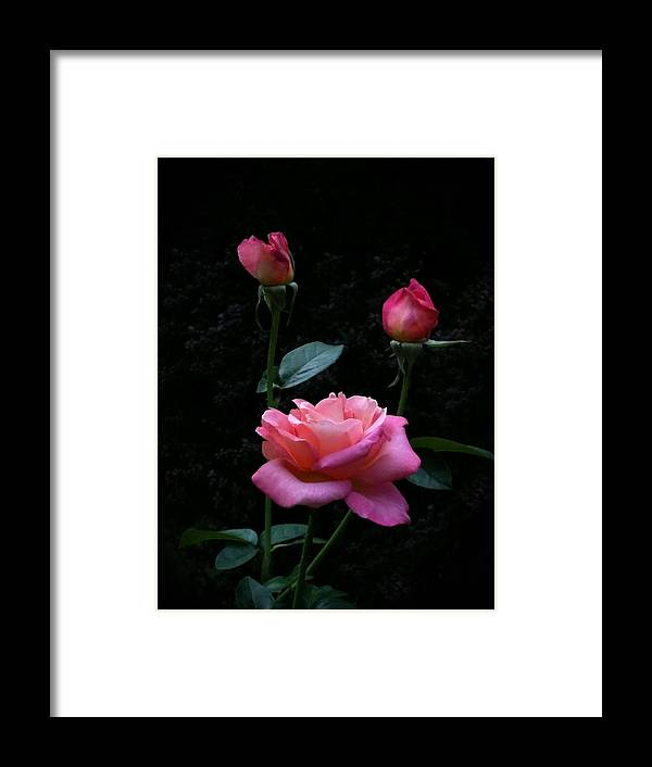 Pink Framed Print featuring the photograph My Evening Delight by Tammy Garner