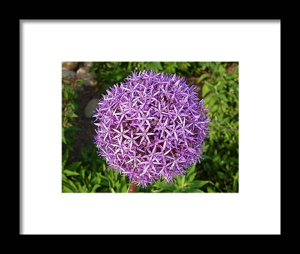 Flower Framed Print featuring the photograph My Idea Of A Ball by Jeanette Oberholtzer
