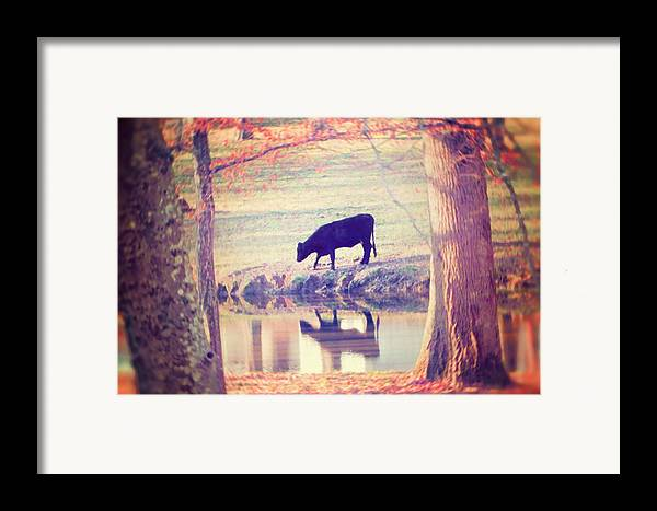 Black Cow Framed Print featuring the photograph My Own Paradise by Amy Tyler