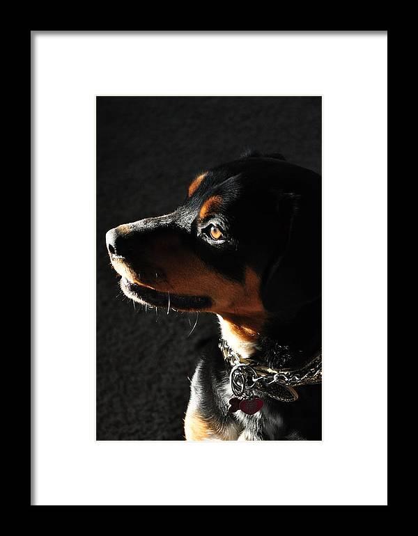 Girl Framed Print featuring the photograph My Protector by Vonda Barnett