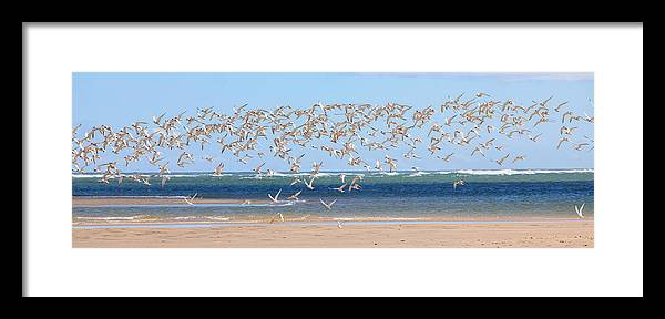 Tern Framed Print featuring the photograph My Tern by Bill Wakeley
