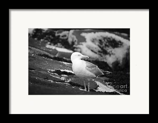 Bird Framed Print featuring the photograph My Turf by Luke Moore