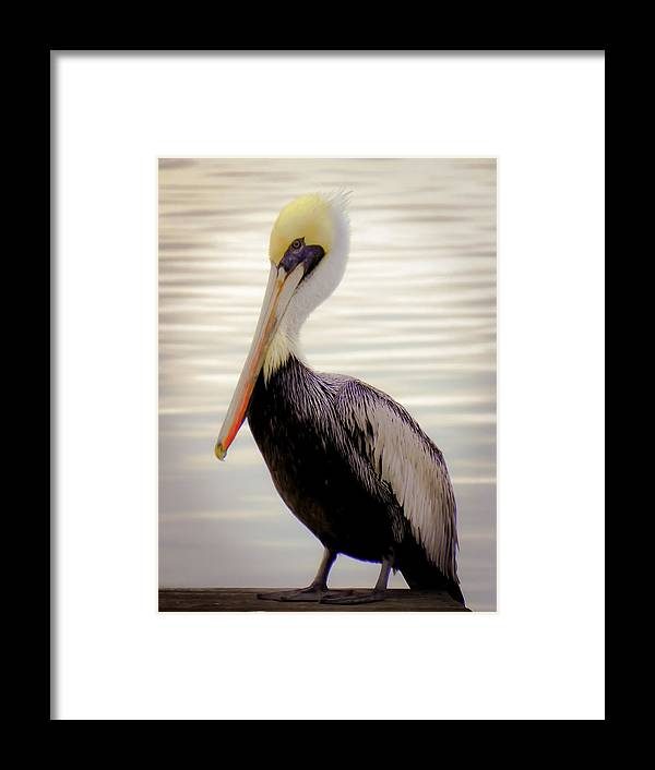 Bird Framed Print featuring the photograph My Visitor by Karen Wiles