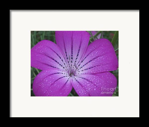 Flower Framed Print featuring the photograph Mysterious Photography by Tina Marie