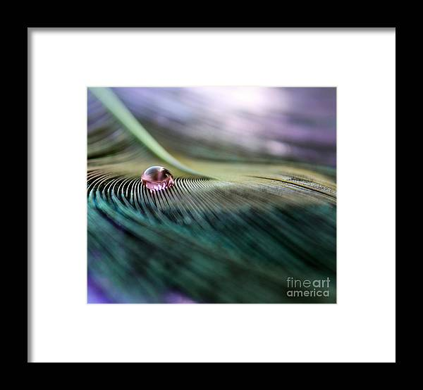 Feather Framed Print featuring the photograph Mystery by Krissy Katsimbras