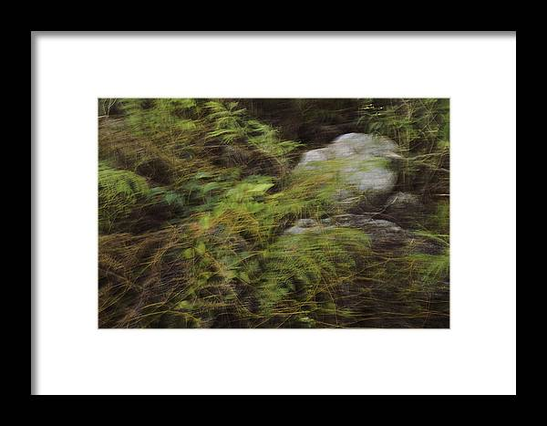 Landscape Framed Print featuring the photograph Mystical Forest by Aleksandra Moroz